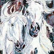 White Arabians Poster