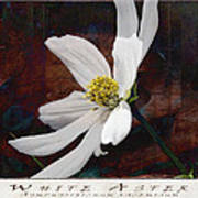 White Aster Study Iv - Titled Poster