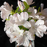 White Azalea Bouquet In Glass Vase Poster