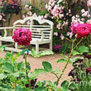White Bench And Pink Climbing Roses In English Garden Poster