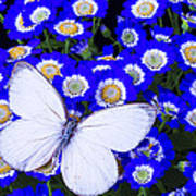 White Butterfly In Blue Flowers Poster