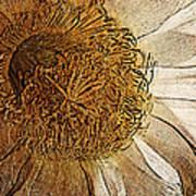 White Cactus Flower Gold Leaf Poster