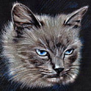White Cat Portrait Poster