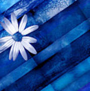 White Daisy On Blue Two Poster