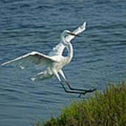 White Egret Landing 2 Poster by Ernie Echols