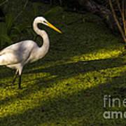 White Egret Poster