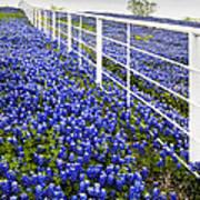 White Fence - Blue Bonnets Poster
