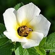 White Flower- Nectar Poster