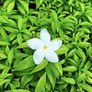 White Flower On Green Poster
