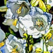 White Flower Spendor Poster