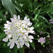 White Flowerettes Poster