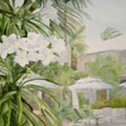 White Flowers Aruba Poster