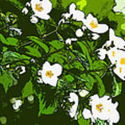 White Flowers II Poster
