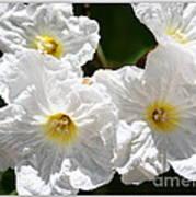 White Flowers In The Desert Poster