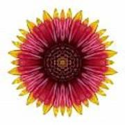 Galliardia Arizona Sun I Flower Mandala White Poster