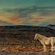 White Horse At Sunset Poster
