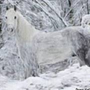 White Horse In The Snow Poster