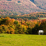 White Horses Grazing With View Of Green Mtns Poster