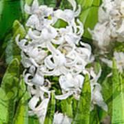 White Hyacinth Flowers Digital Art Poster