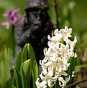 White Hyacinth In The Garden Poster