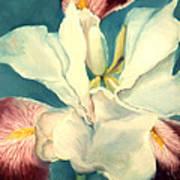 White Iris Poster