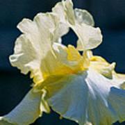 White Iris With Yellow Poster