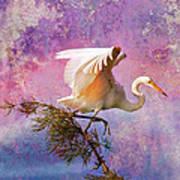 White Lake Swamp Egret Poster by J Larry Walker