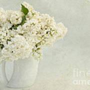 White Lilac In A Cream Jug Poster