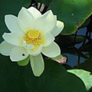 White Lotus I Poster