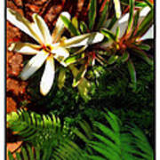 White Maui Flowers Poster