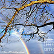 White Oak And Double Rainbow Poster by Thomas R Fletcher