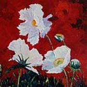 White On Red Poppies Poster