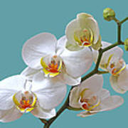 White Orchids On Ocean Blue Poster