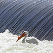 White Pelican Over The Dam Poster