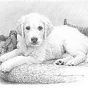 White Puppy Pencil Portrait Poster