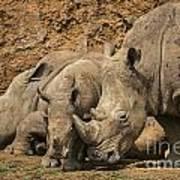 White Rhino 3 Poster