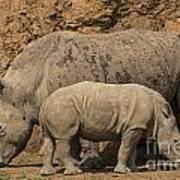 White Rhino 4 Poster