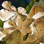 White Rhododendron Poster