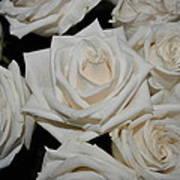 White Rose 1 Poster