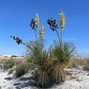 White Sands Dune With Soap Yucca Poster