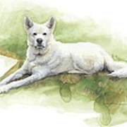 White Sled Dog Lying On Grass Watercolor Portrait Poster