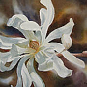 White Star Magnolia Blossom Poster