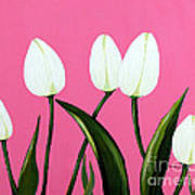 White Tulips On Pink Poster