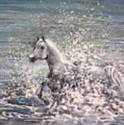 White Wild Horse Poster