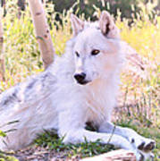 White Wolf Taking It Easy Poster