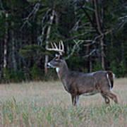 Whitetail Buck 1 Poster