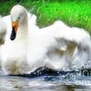 Whooper Swan Flutter Poster
