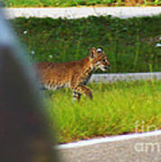 Why Did The Bobcat Cross The Road Poster