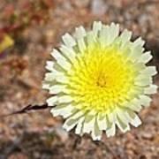 Wickiup Wild Flower Poster