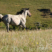 Wild Appaloosa Running Away Poster